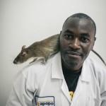 Van de ratten besnuffeld 20