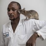 Van de ratten besnuffeld 27