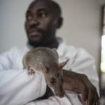 Van de ratten besnuffeld 5