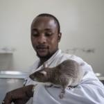 Van de ratten besnuffeld 6